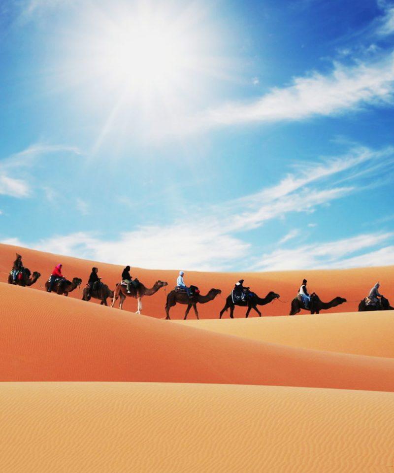 Camel Caravan in the Sahara